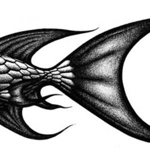 Squishy Fishy illustration